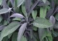 برداشت 820 تن انواع گیاه دارویی در یزد