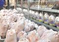 قیمت گوش مرغ 400 تومان کاهش یافت