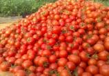 کاهش ۴۰ درصدی در میادین میوه و تره بار
