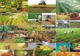 66 پروژه بخش کشاورزی در یزد به بهره برداری رسید